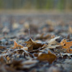 "Calendar ""Lebensraum Eilenriede"" - frozen leaves, © Jens Franke"