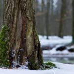 "Calendar ""Lebensraum Eilenriede"" - moss in snow, © Jens Franke"