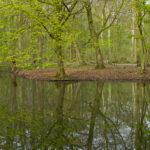 "Calendar ""Lebensraum Eilenriede"" - spring moments, © Jens Franke"