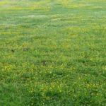 The meadows around Thomas Hardy's Cottage by Varun Sharma