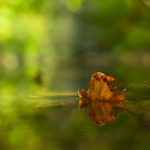 A leaf floating on the Wutach River in the Black Forest © 2011 Jens Franke