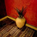 Cactus (Leica M9, 24mm Summilux) © David English