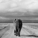 Back to Kenya - Bull Elephant - Leica D-Lux 5