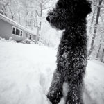 Playing in the Snow; Taken with Leica M9, Voigtlander 12mm by David English