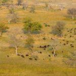 Viva Varun: In Botswana!