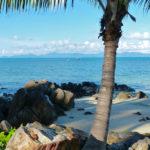 A palm tree sits lazily on the beach