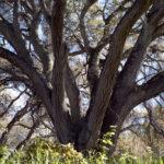 Branches © Matt Borkowski