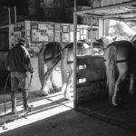 Haythorn Land & Cattle - Ogallala, NB 6 © John Langmore