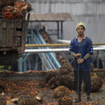 A palm oil plant worker shoveling palm bunches © Justin Guariglia