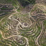 Swirls formations in Johor's topagraphy indicate where palm oil trees once grew © Justin Guariglia