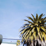 Palms © Matt Borkowski