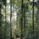 Paradise 19, Bayerischer Wald 1999