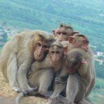 © 100cameras, Thangapandi, 16, India