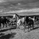 The Cowboy © John Langmore