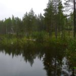 There are thousands of lakes in Lulea that freeze over in the winter; by the summer they are teeming with fish.