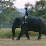 The elephant walk