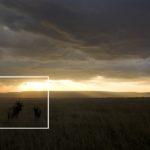 Masai Mara taken by Florian Wagner