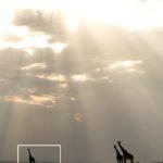 Giraffes taken by Florian Wagner