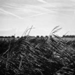 Walberswick (Leica M6, 50mm Summilux Asph. Kodak Ektar 100)